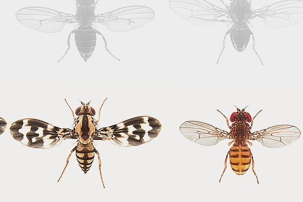 EMBO Practical Course: Drosophila Genetics and Genomics